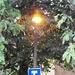 Tea Tree Light