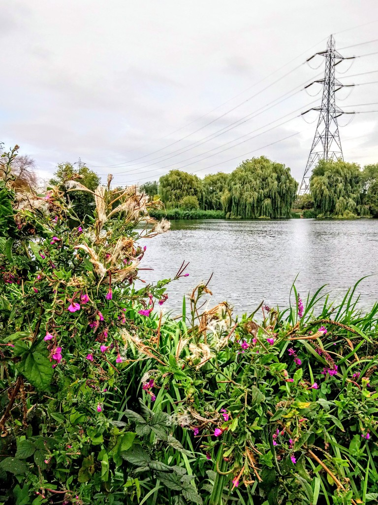 Pylon on the wetlands by boxplayer