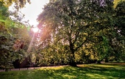 6th Sep 2018 - Sun flare in Green Park