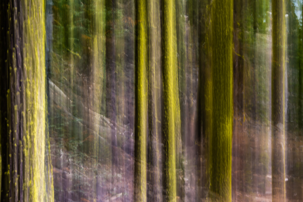 Lichen on the Trees:  ICM Abstract by taffy