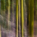 Lichen on the Trees:  ICM Abstract