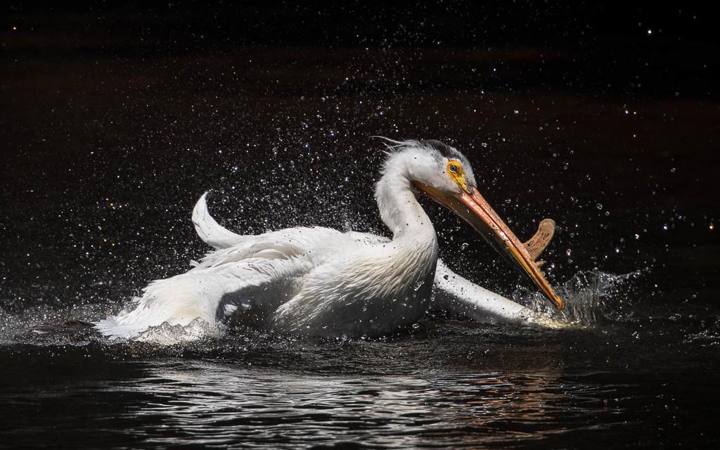Splish, Splash, The Mating Bath by shesnapped