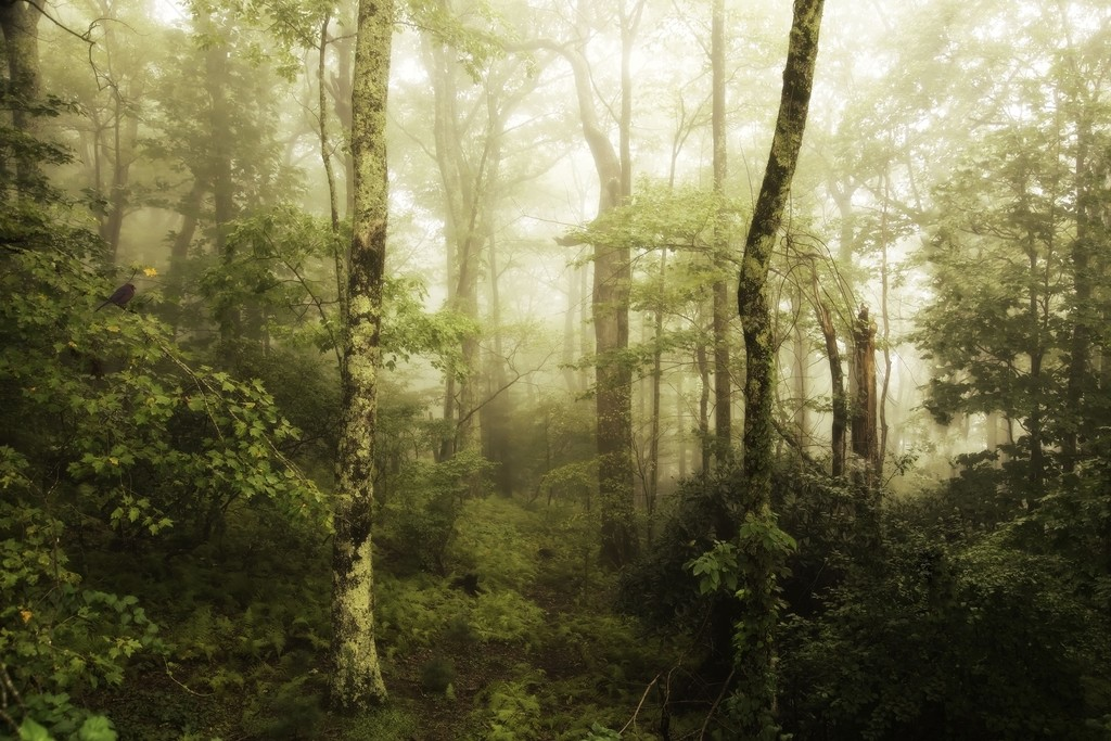 Blue Ridge Parkway in the Mist by shesnapped