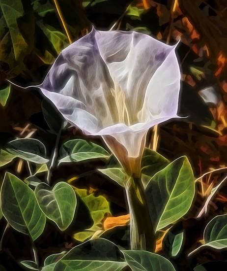 Squash Blossom  by joysfocus
