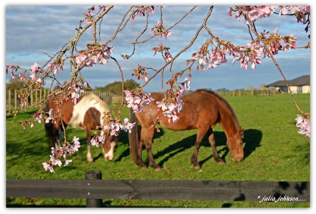 Horse's and Cherry tree's by julzmaioro