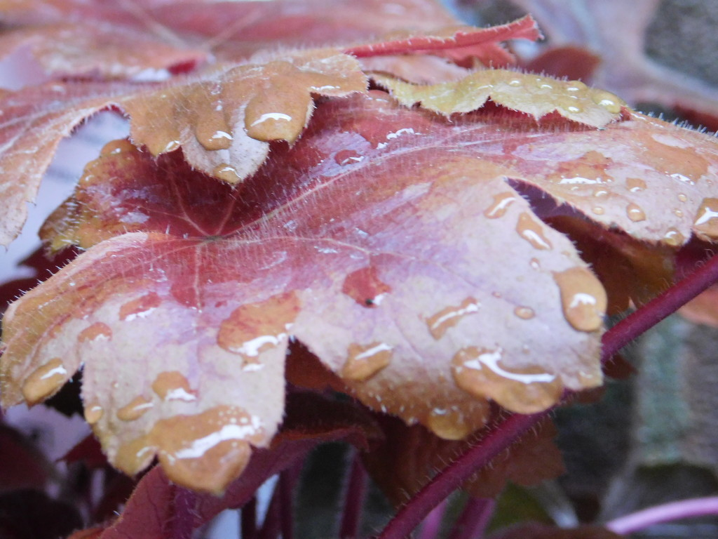 Raindrops on leaf by 365anne