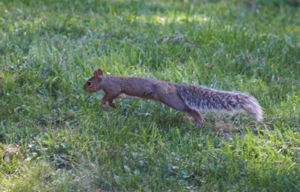 Run squirrel run by mittens