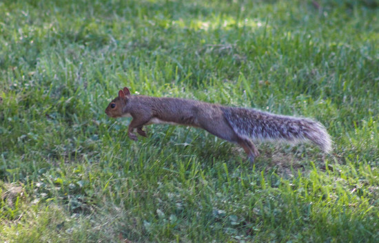 Run squirrel run by mittens