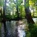 September Sunshine on a Pocono Creek