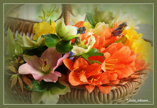 Flowers for Kylie ... by julzmaioro