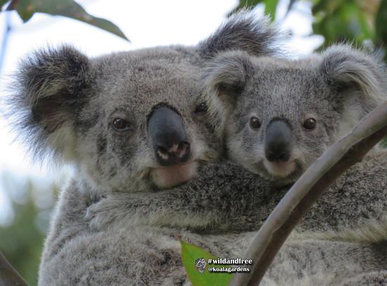 KoalaGardens