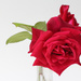 Picking The Last Few Garden Roses