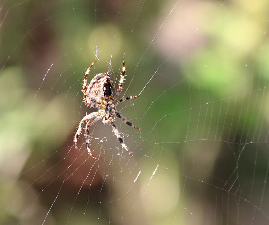 Spider And Web. by wendyfrost