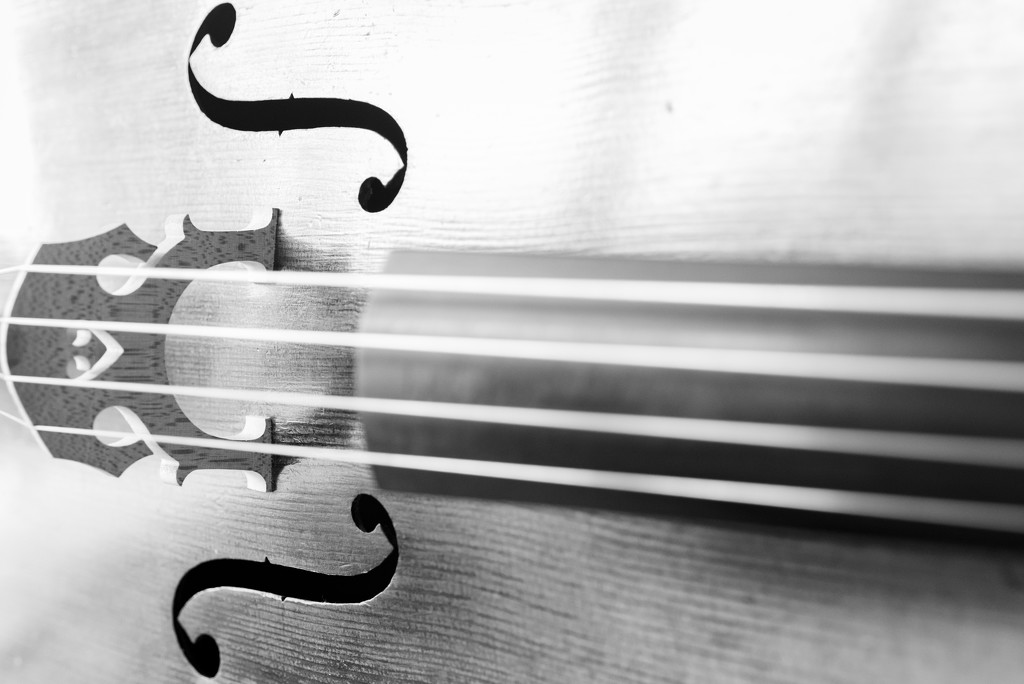 My cello by yaorenliu