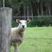What are ewe looking at?!