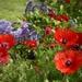 Spring Flowers_DSC7780
