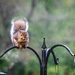 20180907 Squirrel in Rain-1-4 by marylandgirl58