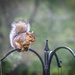20180907 Squirrel in Rain-1-3 by marylandgirl58