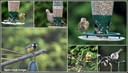 23rd Sep 2018 - Some of today's visitors