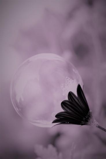 Bubble daisy........  by ziggy77