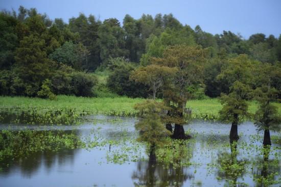 Louisiana's Lake Bigeaux  by louannwarren