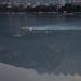 Swimming in Lake Como