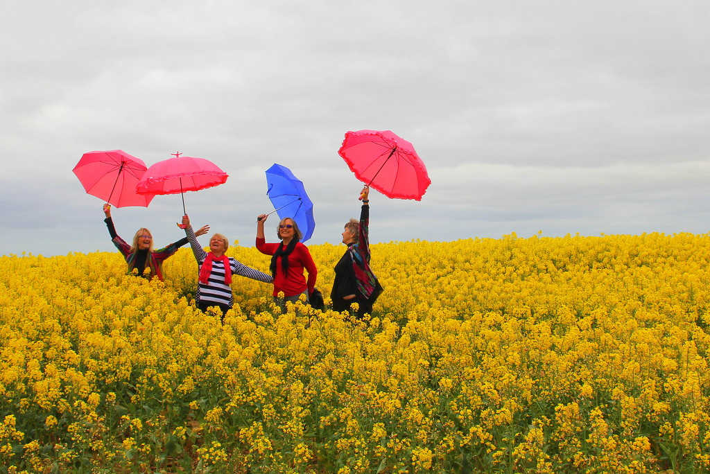 Dancing in the canola by gilbertwood