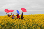 22nd Sep 2018 - Dancing in the canola
