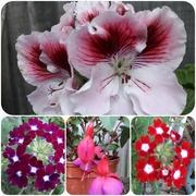 25th Sep 2018 - Long lasting plants