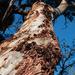SOOC26 Barking up the wrong tree