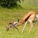 Baby buck  by ludwigsdiana