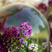 Flowers and Glass Sphere