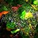 Cobwebs by gardenfolk