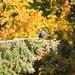 Golden Autumn by jamibann