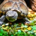 An Alabama turtle with a grand name by louannwarren