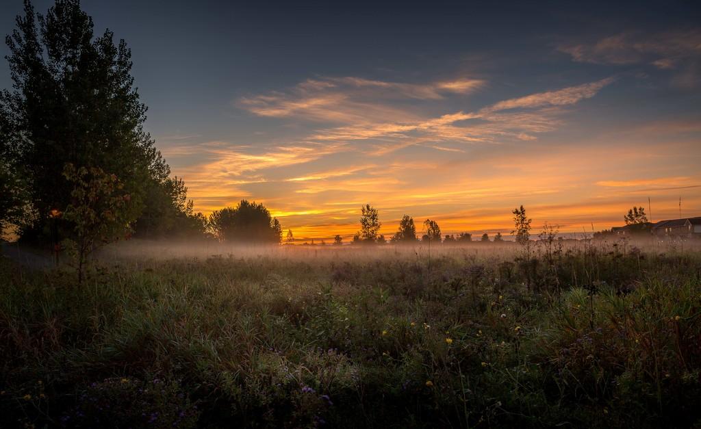 Morning fog by adi314