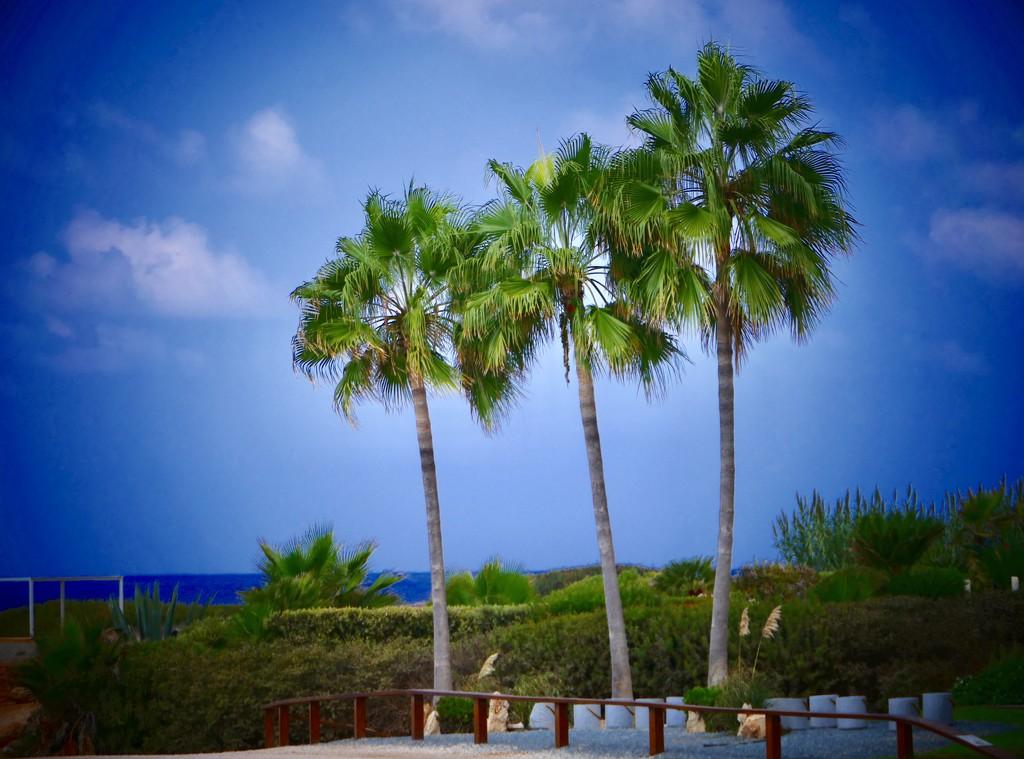 Three Palms by carole_sandford
