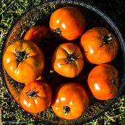 29th Sep 2018 - last of the summer harvest?