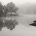 Foggy Morning by milaniet
