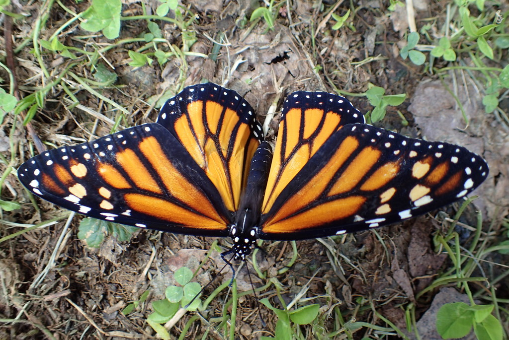Butterfly Festival by cjwhite