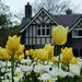 Tulips and poppies and the curator's house by maureenpp