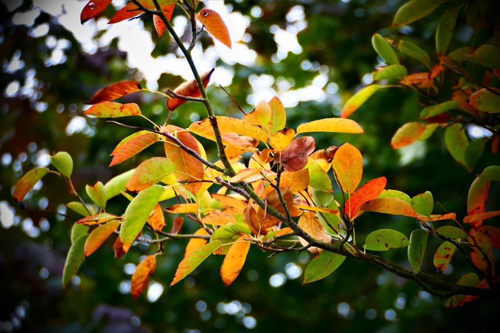 Autumn..... by carole_sandford