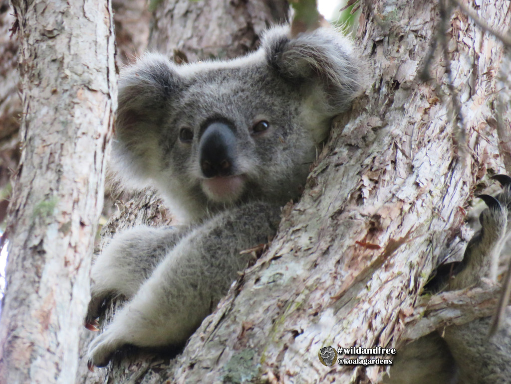 just hanging  by koalagardens