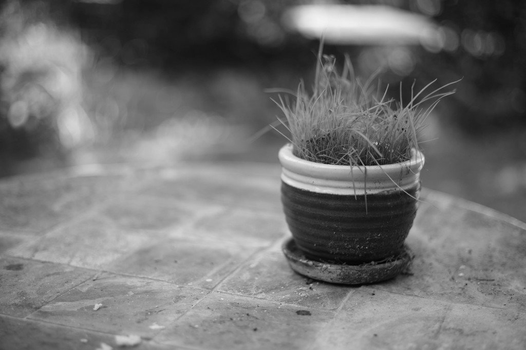 Just a pot and some weeds by domenicododaro