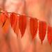 Fall has arrived! by fayefaye