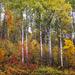 The peak of autumn