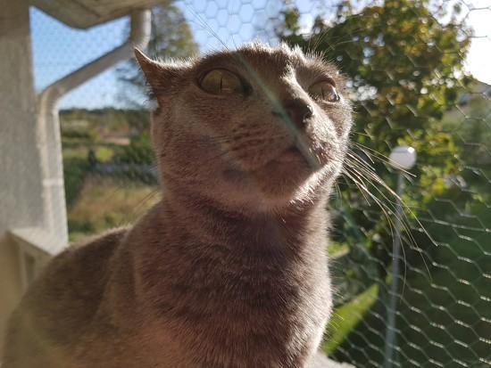 Happy cat  by katriak