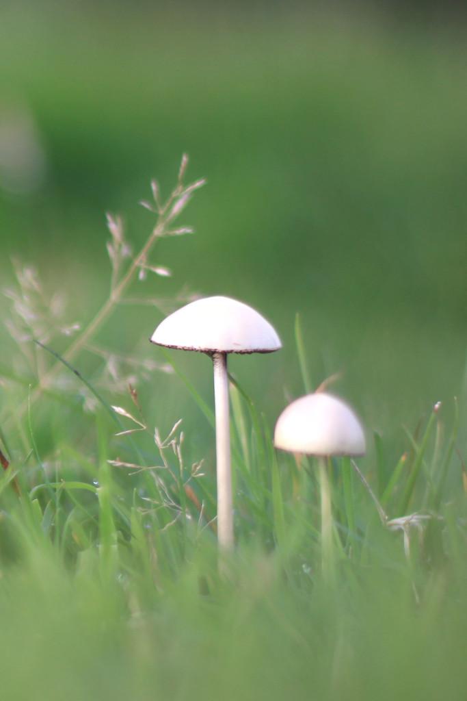 fungi on the fells by callymazoo