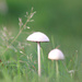 fungi on the fells