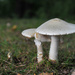 Fall Mushrooms revisited by loweygrace